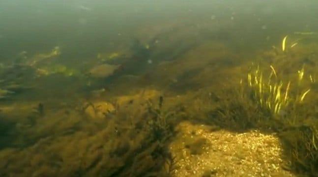 Подводный дрон с видеокамерой