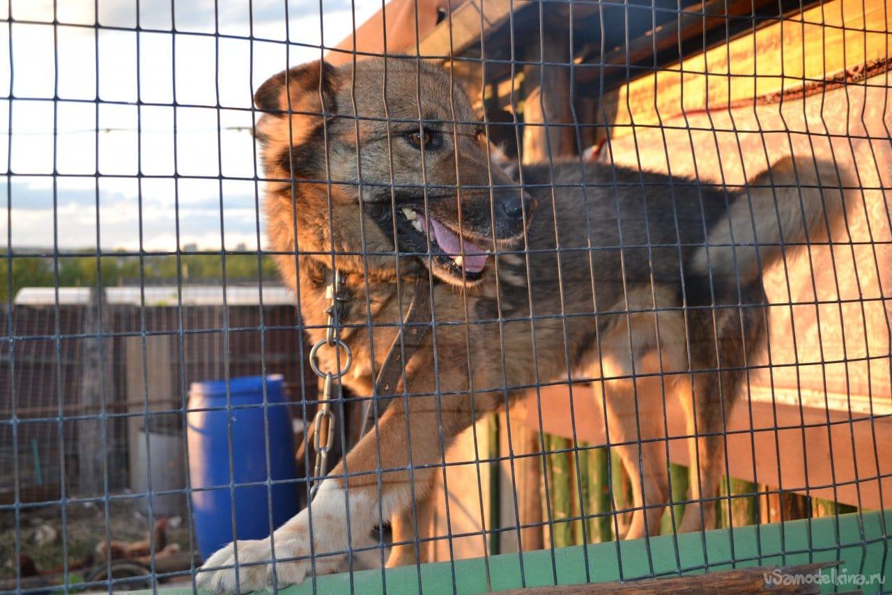 Изготовление вольера для собаки своими руками