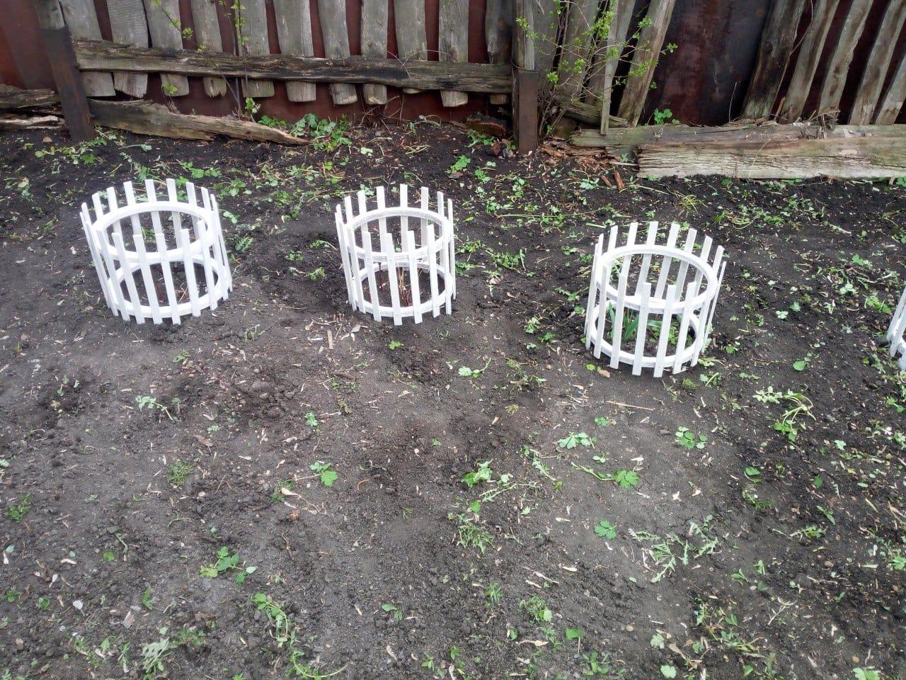 Защитное ограждение для растений