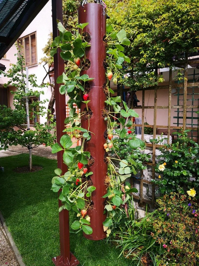 Vertical strawberry bed in a metal tube (solar powered)