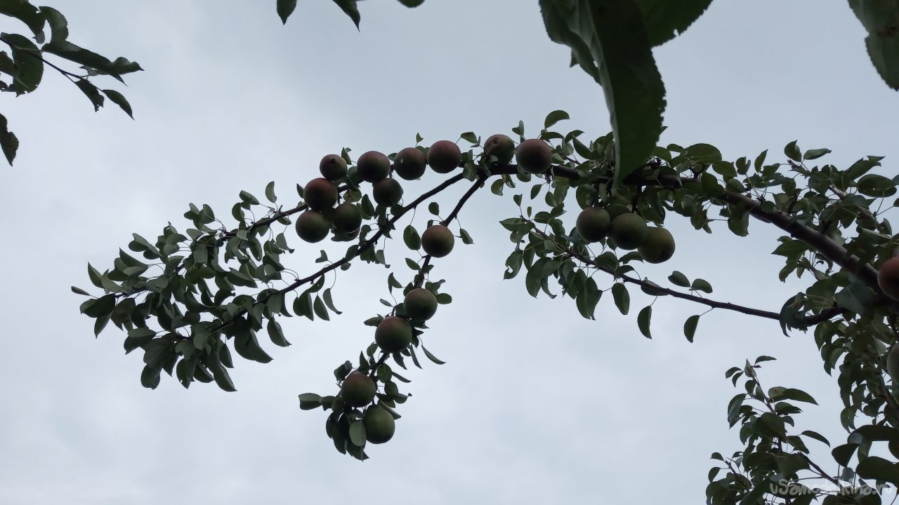 Universal support for fruit tree branches