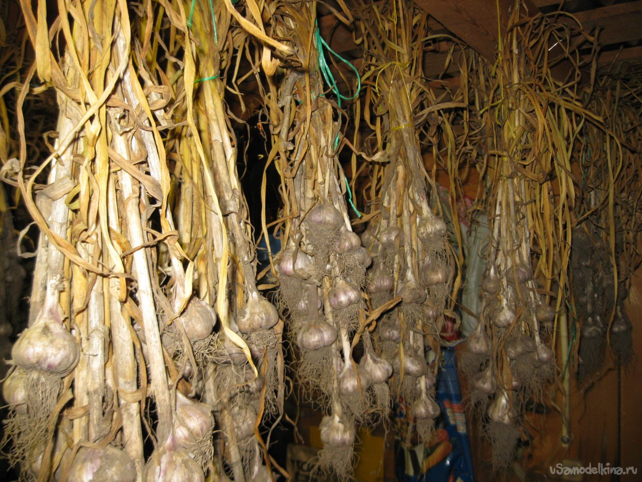 How to prepare garlic for safe and long-term storage