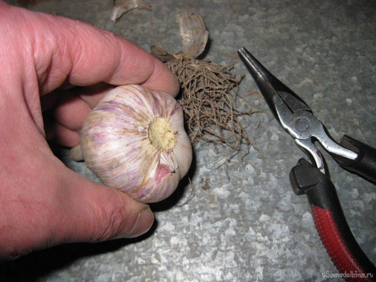 How to prepare garlic for safe and long storage